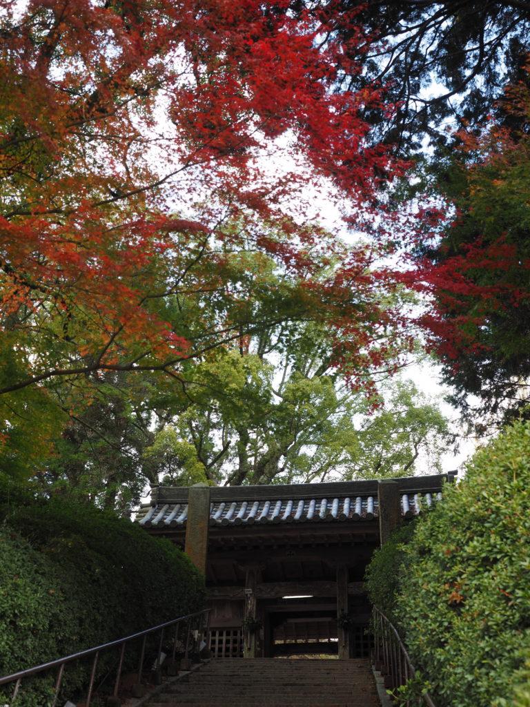 2016秋 大興善寺1