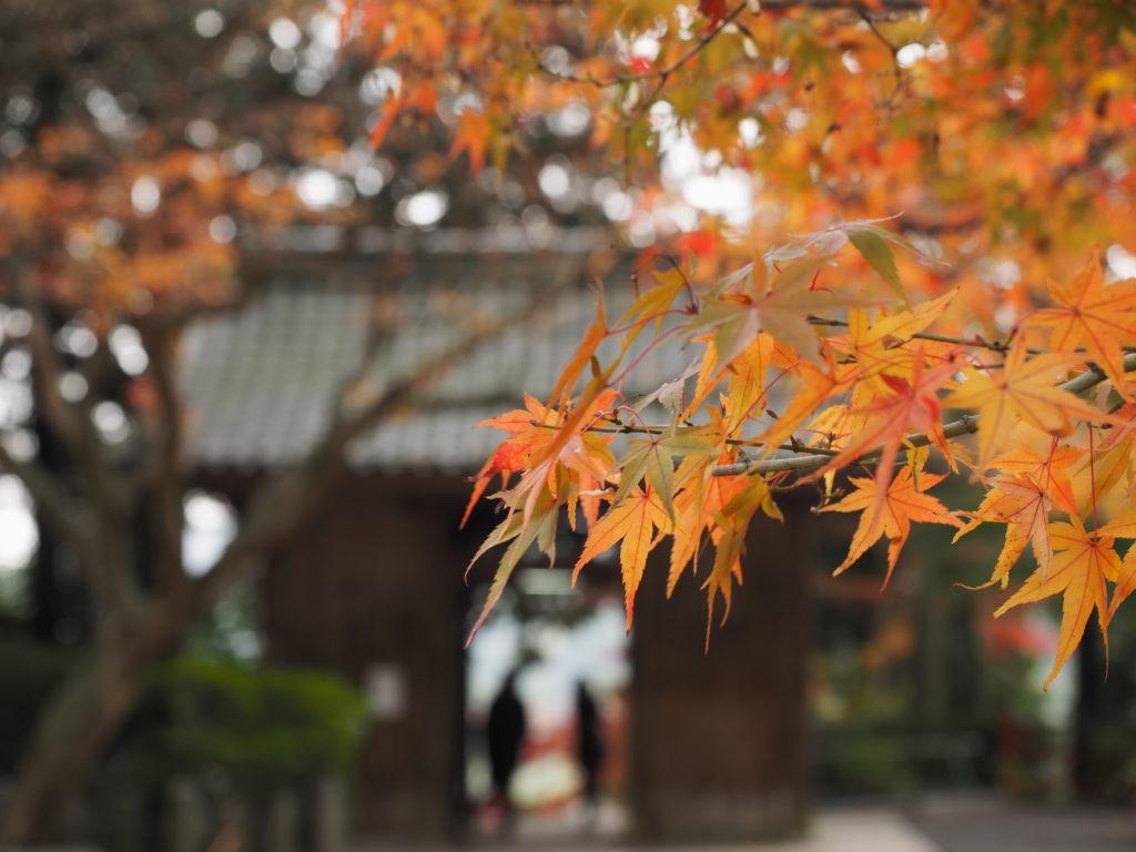 2016秋 大興善寺5