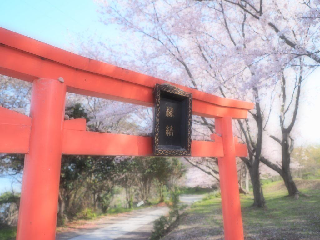 2017 桜3