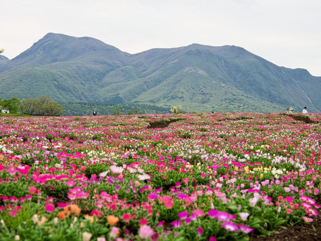 くじゅう花公園4