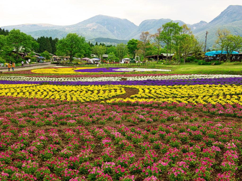 くじゅう花公園5