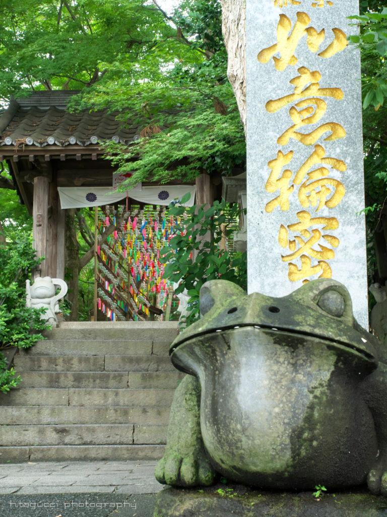 かえる寺1